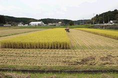 あいがと米:稲刈りアニメーション