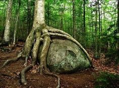Witches Magical Tree Room. The Nine Sacred Woods. -  http://lunaswitchescloset.blogspot.com/2015/07/witches-magical-tree-room-nine-sacred.html