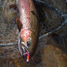 Bait, Trout, Fish, Brown Trout, Salmon