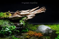In this article you'll find a photo and video step-by-step tutorial for a shallow format aquascape, along with a setup specification detailing all of the aquarium plants, hardscape and equipment used to create it. You can follow links to each of the items and if you like you can buy them- we can ship worldwide. …