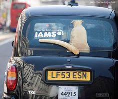 Taxi Advertising #creativeadvertisements