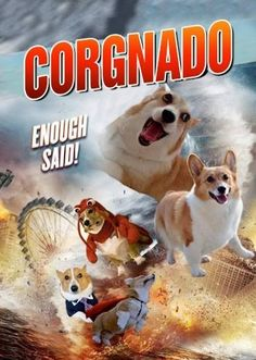 Drool, derp, and HAIR, coming at you on 50 mile an hour winds! corgi #sharknado…