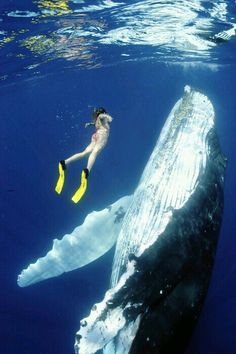 Swim/scooba dive in the ocean with whales!