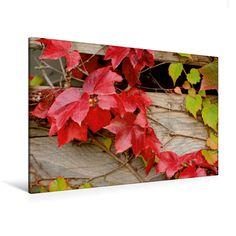 Rotes Herbstlaub - CALVENDO