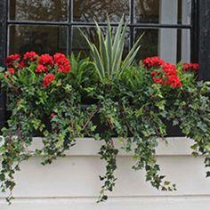Faux Outdoor Planting Window Box Plants, Porch Plants, Window Box Flowers, Window Planter Boxes, Faux Outdoor Plants, Outdoor Planters, Faux Plants, Railing Planters, Outdoor Decor
