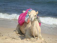 #camel #tunis #hammamet