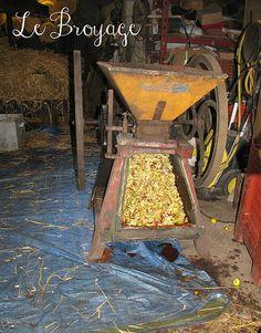 Fabrication du cidre fermier à l'ancienne