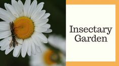 An insectary garden is a great way to encourage pollinators and discourage the bad bugs in your garden. Here's what my insectary garden looks like. Design Inspiration, Make It Yourself, My Love, Garden, My Boo, Garten, Gardening, Outdoor, Gardens