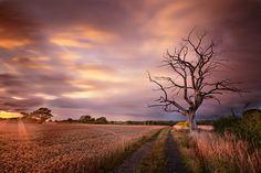 golden hour by alan ranger, via 500px