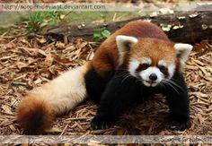 ♥RP♥ 18 animal kingdom - Google Search