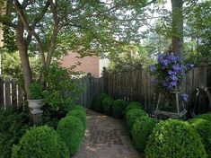 Evergreen Plants for Year-Round Curb Appeal - Zillow Digs
