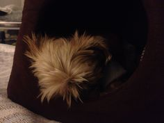 Fast asleep in my igloo - loving the warmth!