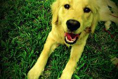 Dogggyy *I took :)*