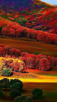 Science Discover Photo The post Photo autumn scenery appeared first on Trendy. Nature Green All Nature Amazing Nature Fall Pictures Nature Pictures Beautiful World Beautiful Places Beautiful Pictures Landscape Photography Beautiful Nature Pictures, Nature Photos, Amazing Nature, Beautiful Landscapes, Beautiful Places, Beautiful Scenery, Autumn Hill, Landscape Photography, Nature Photography