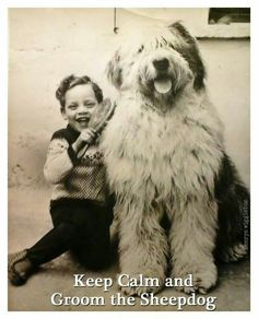 Keep calm and groom the sheepdog. vintage oes