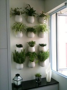 A wall of herb pots for the kitchen