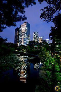가벼운 운동과 산책을 즐기기에 더할 나위 없는 여의도공원 '한국 전통의 숲'. 연못과 연잎, 빌딩과의 조화가 아름답다.