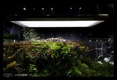 Green Aqua Showroom   oleh viktorlantos