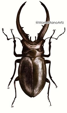 Sorry folks that I was being absent, but I was working on these #bugs so hard... This is the first of this #collection - #Stag #Beetle. I #colored it digitally so it looks more #realistic. #Staytuned! #redbubble @redbubble #drawing #insect #artwork https://www.redbubble.com/people/monomano/works/31483047 …pic.twitter.com/4a9mI5AZxf
