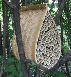 Welcome non-aggressive Mason Bees to your garden this spring.  Great pollinators..
