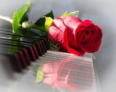 Animated Red Rose on a Piano flowers butterfly rose piano bouquet red rose for you flowers for friend animated flowers flower graphics