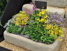 Wunderschönes Pflanzbeispiel, zu Besuch auf einer englischen Messe - mehr auf www.country-garden.de