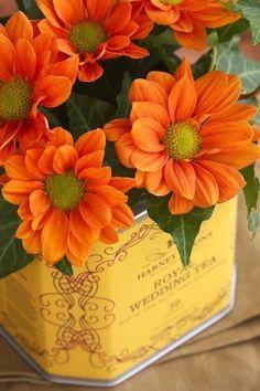 Orange & Yellow