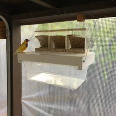 18 отметок «Нравится», 2 комментариев — GouldianFinch_Lauzan (@danielgonzalezlauzan) в Instagram: «#finchfeeder #finchfeeding #gouldianfinch #gouldian #aviary #finchaviary»