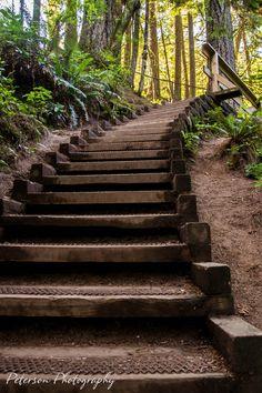Lynn Canyon Park, North Vancouver, British Columbia, Canada ✯ ωнιмѕу ѕαη∂у