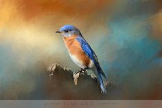 Bluebird On The Fence