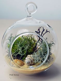 Hanging glass orb terrarium with lichen, sea shells, sea fan, and sand. $20.00, via Etsy.