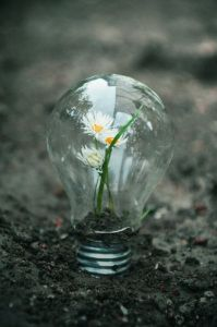 Creative gardening...flower light bulb