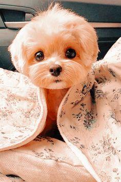 Cute Wild Animals, Baby Animals Super Cute, Cute Baby Dogs, Baby Animals Pictures, Cute Animal Photos, Cute Little Animals, Cute Animal Pictures, Cute Funny Animals, Cute Funny Dogs