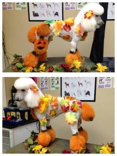 -Repinned-Happy Harvest Poodle