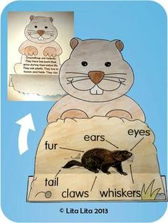 Groundhog facts A science activity for Groundhog Day