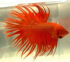this is the most beautiful fish ive ever seen