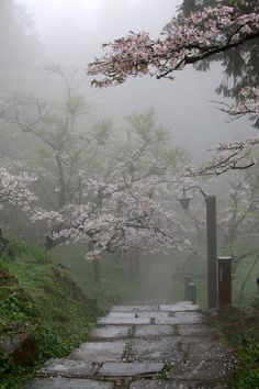 Zen garden..I can feel the mist on my face now..I love the fog..
