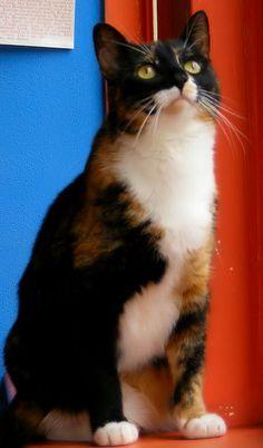 World Cat Day!!!