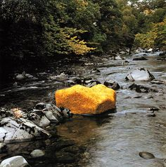Andy Goldsworthy   Yellow Elm Leaves Laid over a Rock, Low Water  October 15, 1991 Scaur Water, Dumfriesshire, Scotland.