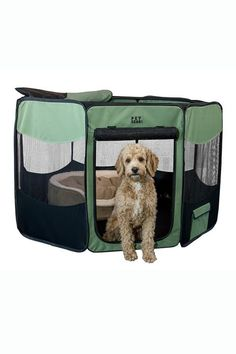 20 Camping With Dogs Tips and Ideas - Best Dog Camping Gear Dogs And Kids, Animals For Kids, Camping Hacks, Camping Gear, Road Trip With Dog, Camper Van Life, Wild Atlantic Way, Kids Tents, English Fun