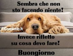 Italian Memes, Savage Quotes, Day For Night, Quotes About God, Good Mood, Vignettes, Funny Dogs, Dumb And Dumber, Good Morning