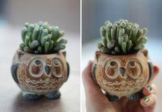 Owl planter, cute!