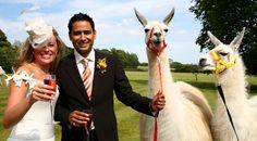 Animals On Wedding