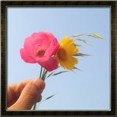 감성사진 / 꽃그림