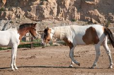 Choctaw Horses at the Black Hills Wild Horse Sanctuary