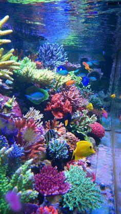10 Tips on Designing a Freshwater Nature Aquarium Aquarium Marin, Coral Reef Aquarium, Saltwater Aquarium Fish, Saltwater Tank, Marine Aquarium, Freshwater Aquarium, Coral Reefs, Marine Fish Tanks, Marine Tank
