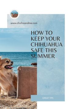 It's a time to explore and go for walks with our Chihuahuas. But, it is also a time to think about how to keep our precious Chihuahuas healthy and happy during the hot summer months. #chihuahuacare, #chihuahuapuppies, #seniorchihuahua, #chihuahuadogs, #chihuahuamix, #chihuahuafacts, #chihuahuaarticles, #chihuahuahelp, #chiwawa, #chihuahuahealthissues, #chihuahuaproblems, #chihuahuawebsite, #chihuahuabehaviorissues #chi, #chihuahuastory, #littledogs, #tinydogs, #minidogs