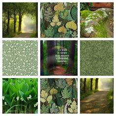 A thousand miracles Forest Flowers, My Mood, Affirmations, Reflection, Feelings, Positive Affirmations, Confirmation, Affirmation Quotes