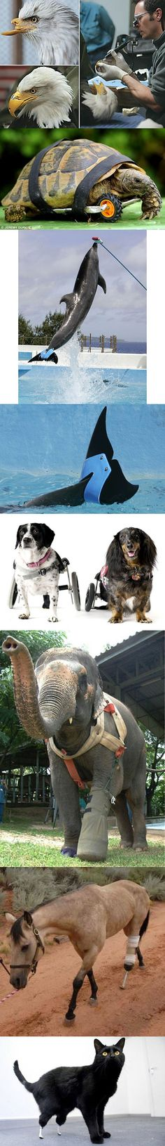 Awesome . . .my pup is now handicapped so I feel for these animals