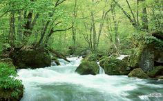 829076-1440x900-forest_river_wallpaper_1872f.jpg (1440×900)